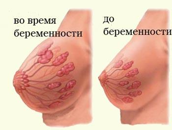 11 тиждень вагітності груди