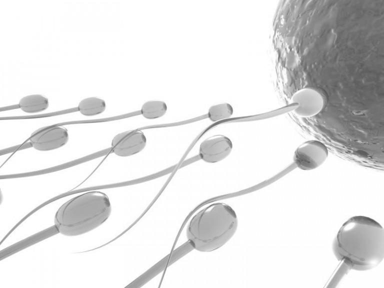 Підготовка чоловіка до зачаття сперматозоїди