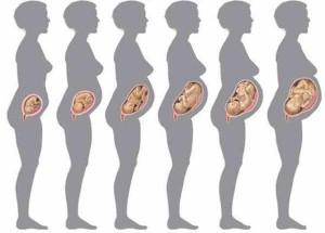 Вага плода по тижнях вагітності