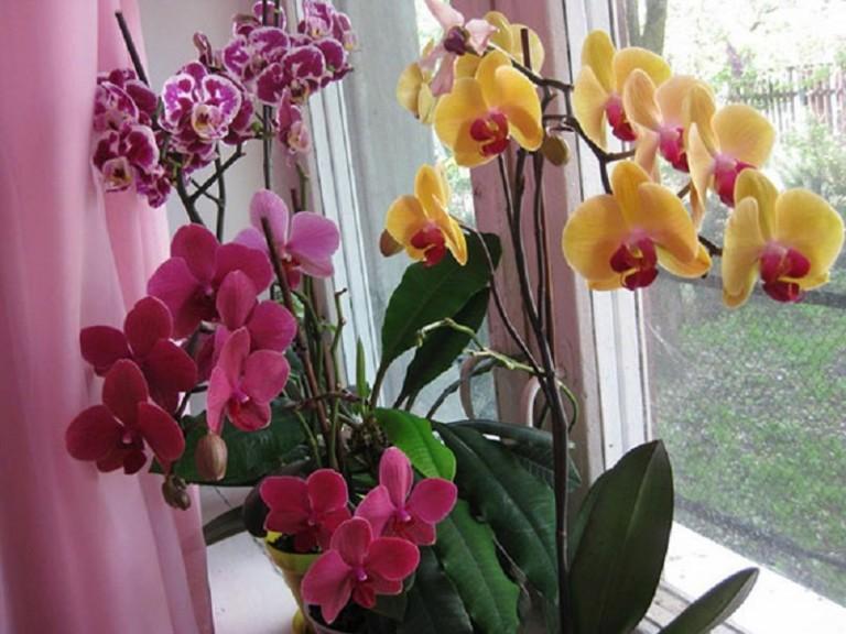 Цвітіння орхідей - секрети правильного догляду