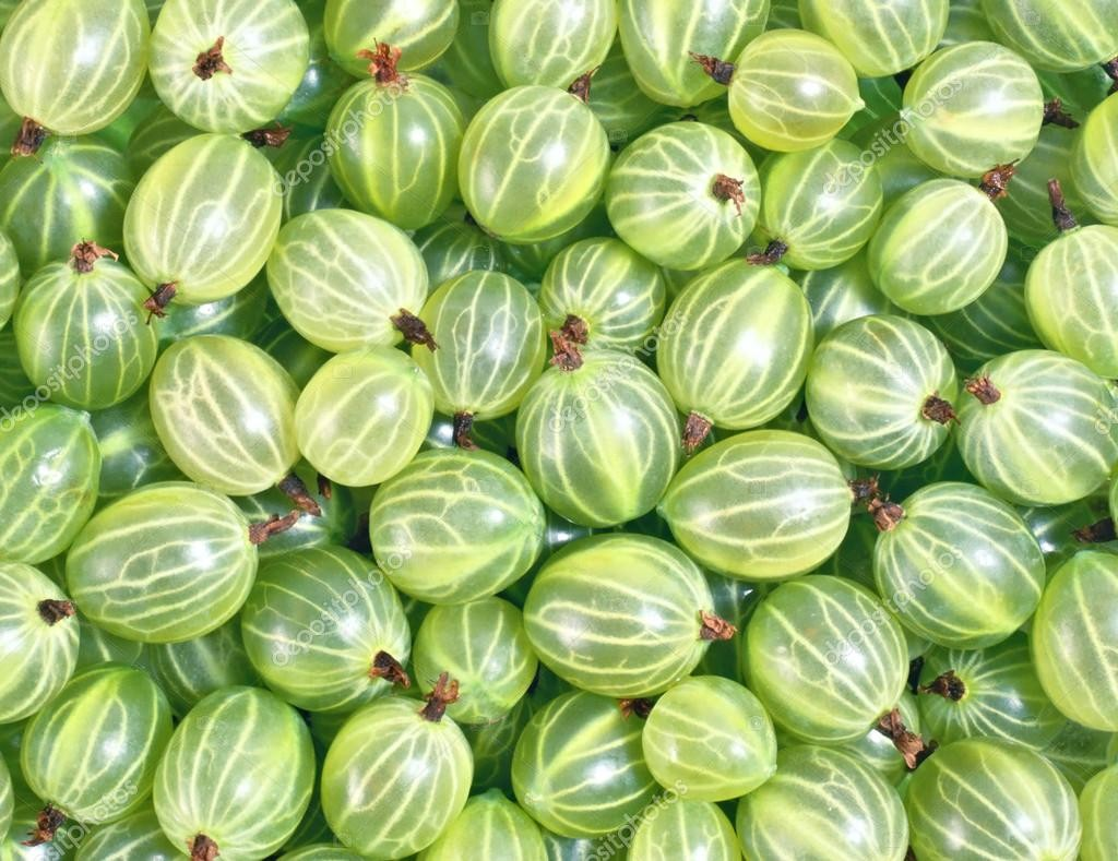depositphotos_8551153-stock-photo-gooseberries-background