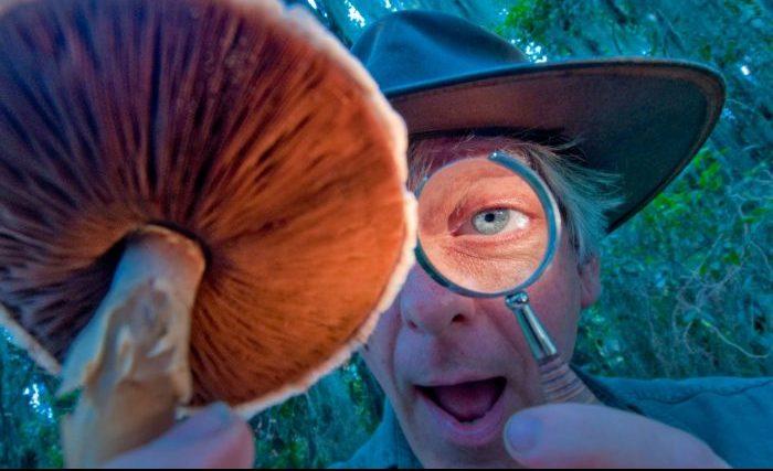 Перша допомога при отруєнні грибами