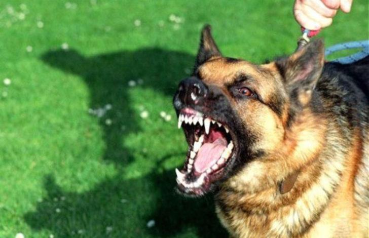 Заохочуючи агресивна поведінка свого вихованця, господар ризикує сам бути укушеним