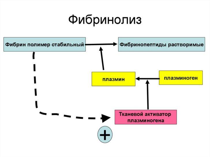 Процес згортання має логічне продовження - розчинення тромба (фібриноліз)