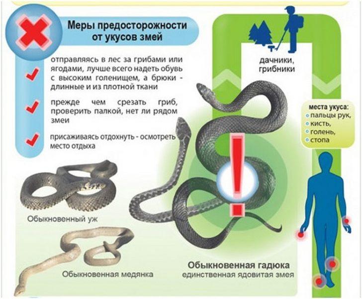 Щоб уникнути зміїного укусу, потрібно бути уважним на природі