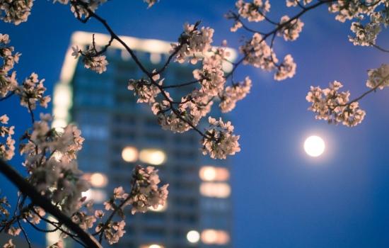 Місячний календар стрижок на квітень 2019 року: сприятливі і несприятливі дні для стрижки, завивки і фарбування волосся