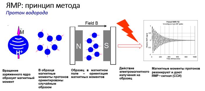 В основі МРТ лежить явище ядерно-магнітного резонансу