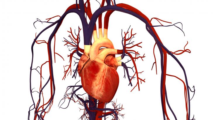 Тиск - основна характеристика роботи серця і судин