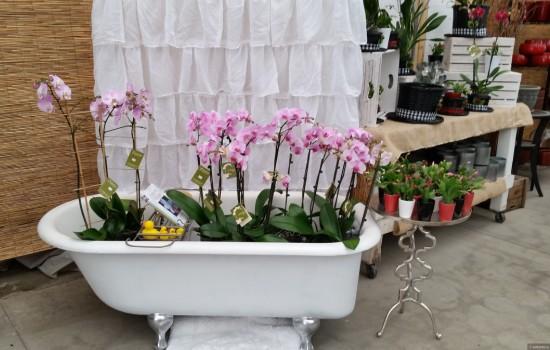 Особливості поливу орхідей в домашніх умовах. Поради та рекомендації для початківців
