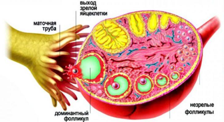 При руйнуванні домінантного фолікула у жінки можуть спостерігатися рожеві виділення з піхви