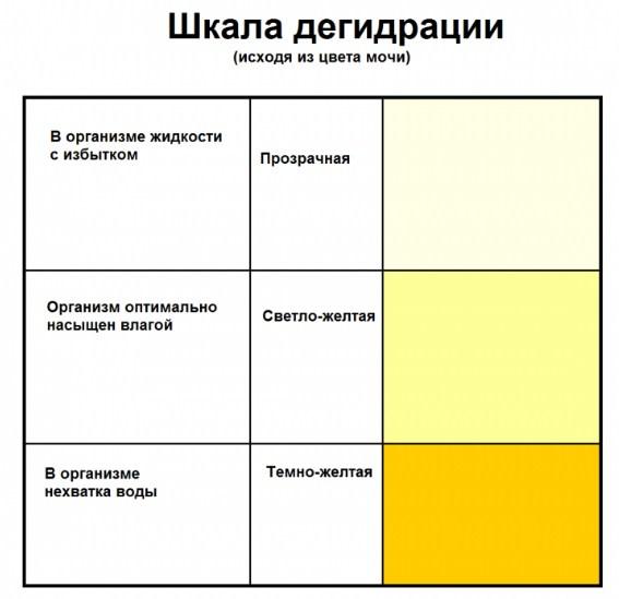 Колір сечі в більшості випадків залежить від кількості рідини, прийнятої людиною протягом доби