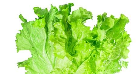 """Як виростити салат на підвіконні: """"Айсберг"""" та інші сорти салату"""