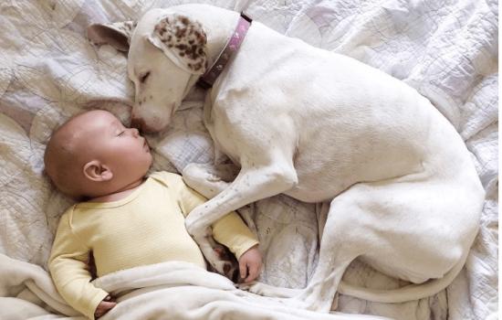 Яку домашню тварину не можна заводити, якщо в будинку маленька дитина: чому?