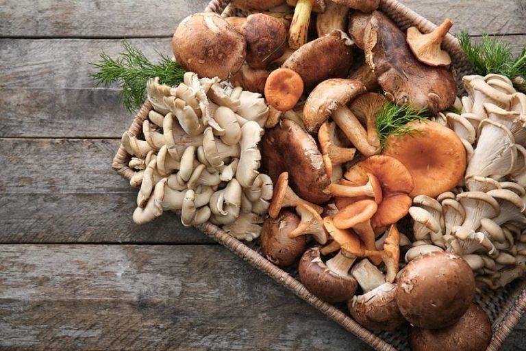 Отруєння отруйними грибами: найнебезпечніші види
